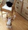 Kittens_021